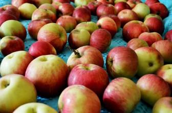 Три рецепта из свежих яблок, которые доступны каждой хозяйке